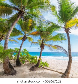 Beautiful white sand beach wiht palm trees on Seychelles.