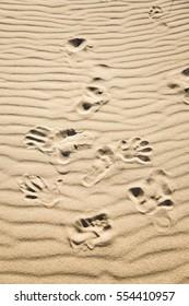 Beautiful white sand at the sea beach