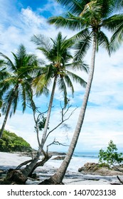 Beautiful white sanded beach with 3 palm trees in Montezuma, Costa Rica