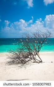 Beautiful white send beach tropical island blue lagoon with seashells on tree. Perfect vacation relax sea view on Maldive