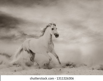 Beautiful white stallion running in desert, monochromatic tones