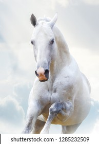 Beautiful white stallion in winter