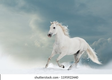 Beautiful white stallion in winter with cloud skies behind