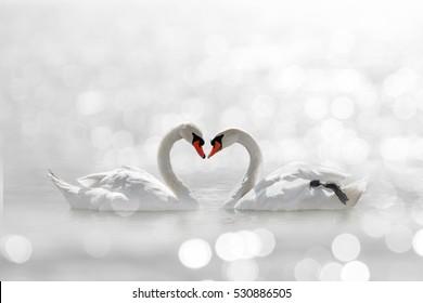 beautiful White swan in heart shape on white lake bokeh .Love bird concept