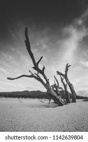 Beautiful wide angle landscape photo of the old dead trees in a dried dam, Brandvlei dam in the Western Cape Of south Africa