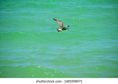 Beautiful Wild Bird in Beach and Blu Sky