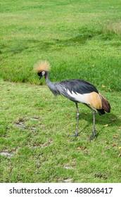 Beautiful wild birds and rare soft-focus images.