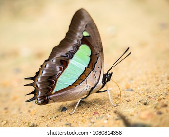 Beautiful wild butterfly on the ground