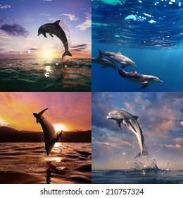 beautiful wild dolphins set