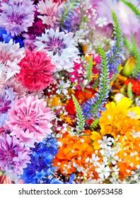 Beautiful Wild flowers background