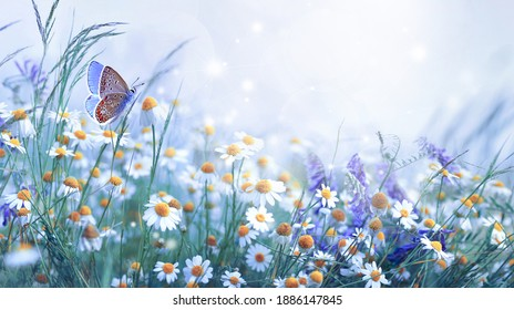 Beautiful wild flowers daisies and butterfly in morning cool haze in nature spring close-up macro. Delightful airy artistic image beauty summer nature. - Shutterstock ID 1886147845
