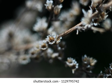beautiful wild flowers on blurred background