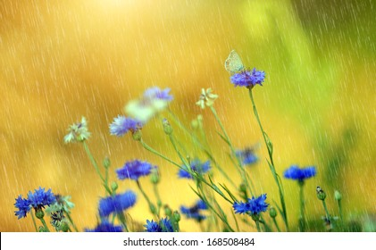 Beautiful wild flowers in summer rain