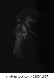 beautiful wild friesian horse stallion in black background