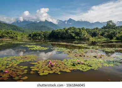 Beautiful wild lake landscape in the Atlantic Rainforest near Guapiacu, Rio de Janeiro, Brazil