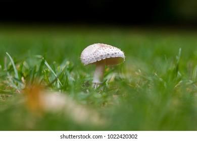Beautiful wild mushroom in a grass