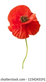 Beautiful wild red poppies isolated on a white background.