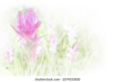Beautiful wild siam tulips blooming in the jungle in watercolor painting.