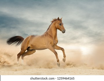 Beautiful wild stallion running on a wild in prairies