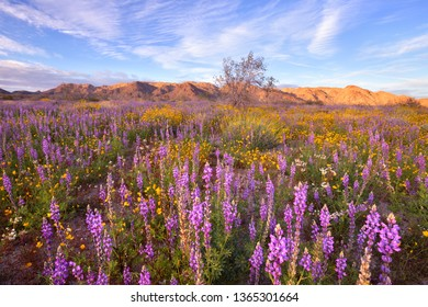 Beautiful wildflower at sunset