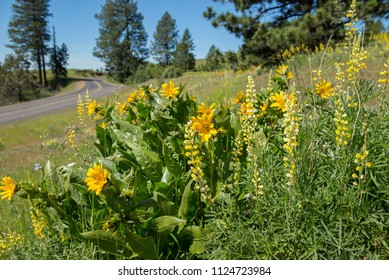 Beautiful wildflowers along the backroads of northeast Oregon.  Cabbage Hill outside Pendleton.