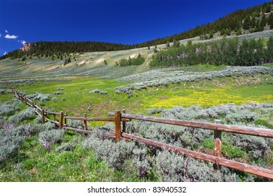 Beautiful wildflowers along a rustic fenceline in the Bighorn National Forest of Wyoming