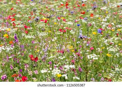 Beautiful wildflowers growing in a meadow
