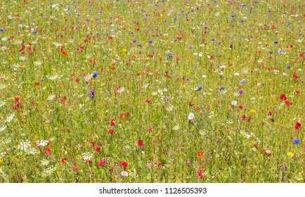 Beautiful wildflowers growing in a meadow