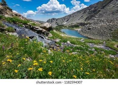 Beautiful wildflowers near Upper Diamond Lake in Indian Peaks Wilderness Colorado