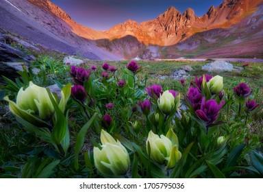 Beautiful wildflowers surrounding an alpine lake in southwest Colorado