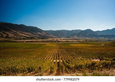Beautiful wine country landscape in san Clemente, Maule Region, Chile. Hillside with vineyard covering the entire region.