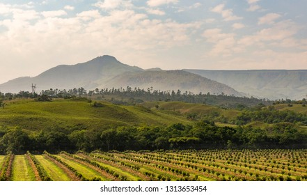 Beautiful wine growing region