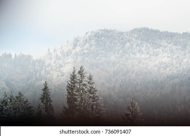 Beautiful winter background with snowy trees on a mountain