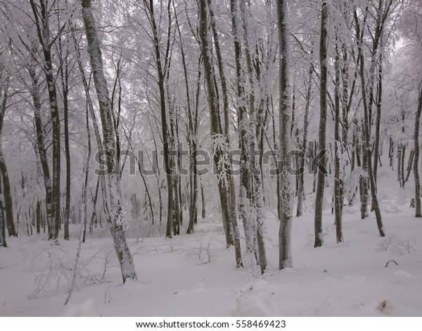 Beautiful Winter Forest Background Snowy Forest Stock Photo