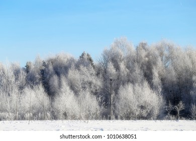 Beautiful winter forest covered with snow with frost