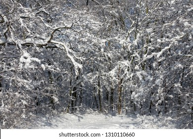 Beautiful winter forest covered with snow at sunny day