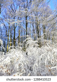 Beautiful winter in the forest in Larvik, Norway. Snowy landscape.