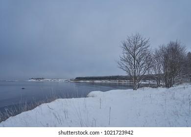 Beautiful Winter forest near Sea