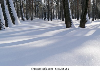 Beautiful Winter Forest or Park in Snow with Space for Text. Frosty and Sunny Day