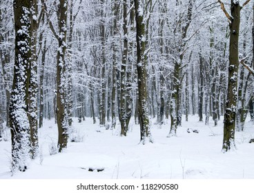 beautiful winter forest  and the road