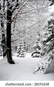 Beautiful winter forest scene