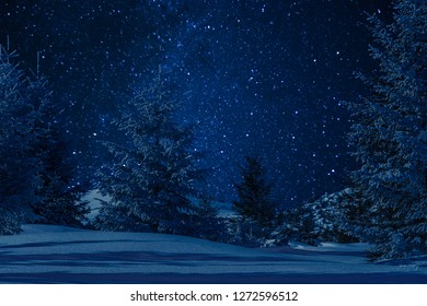 Beautiful winter forest with snow covered trees on a clear night, christmas landscape