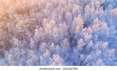 Beautiful winter forest in sunlight. Snowy forest from above. White trees with snow in morning sunlight.