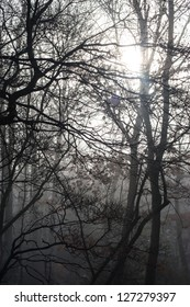 Beautiful Winter Forest Trees at Sunrise or Sunset with Sun Shining Through Limbs