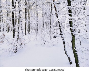 Beautiful winter in the forest. Wintertime in Larvik, Norway.