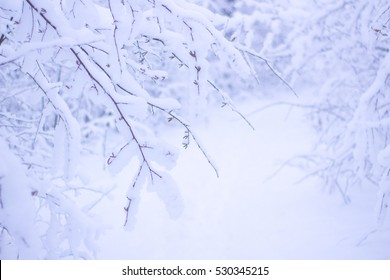 Beautiful Winter Forrest Nature Landscape. Branches of Trees Covered White Clean Snow.