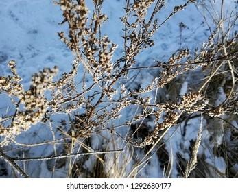 Beautiful winter image - close up of dryed grass (giant sumpweed) covered with rime, branches lit by the sun against the background of blue in Moscow region, Russia - photo with tilt-shift effect