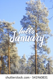 Beautiful winter image - frozen tree branch and leaves covered with rime. Hello january card