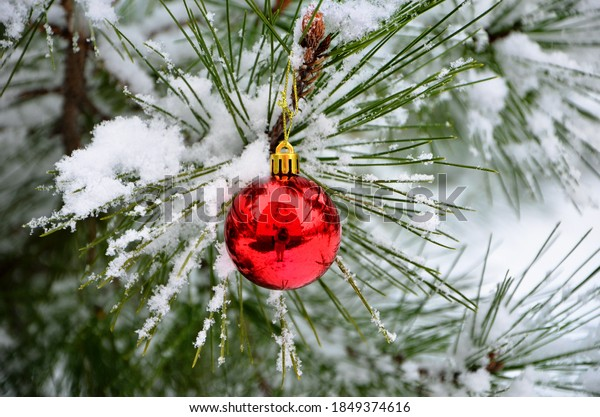 beautiful winter image red glass ball on pine branch in snow