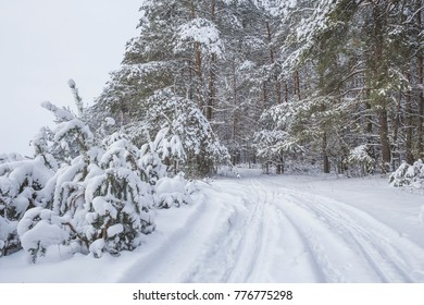 Beautiful winter landscape with big snow. Nature in the vicinity of Pruzhany, Brest region.